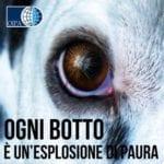 Botti di Capodanno, il Covid non li ferma: decalogo Oipa per proteggere cani e gatti